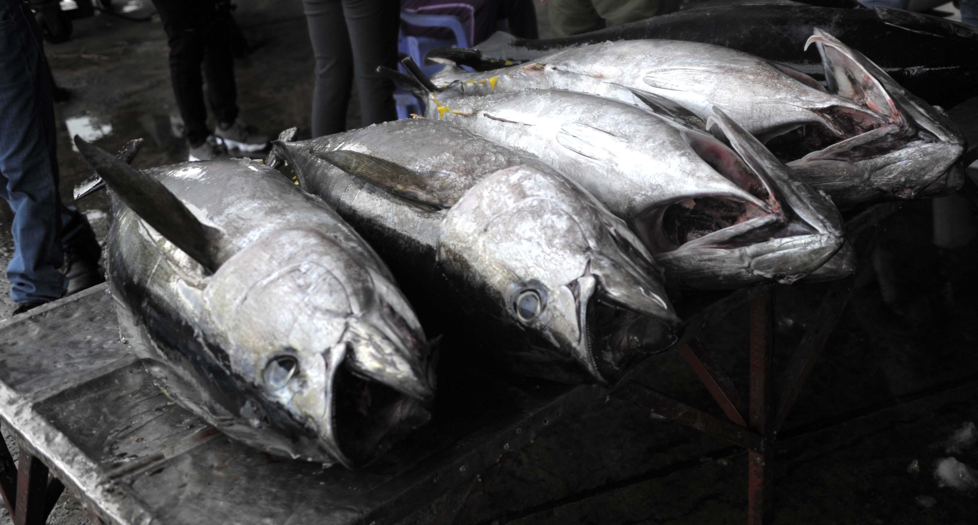 Khánh Hòa xuất khẩu hơn 1 tỉ USD nhưng ngành thủy sản giảm hơn 21% trong 9 tháng năm 2020 - Ảnh 2.
