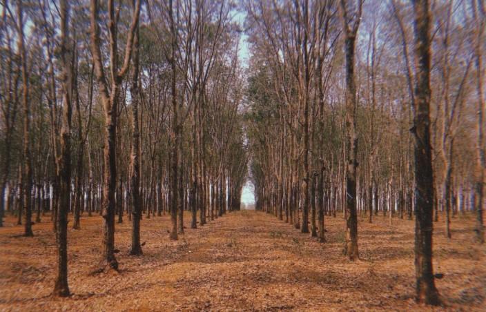 Ngất ngây với gam màu núi rừng Tây Nguyên trong chuyến du lịch Pleiku - Ảnh 9.