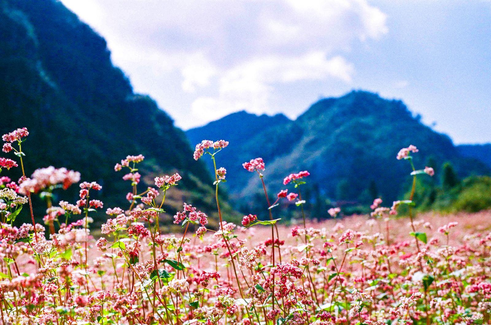 Du lịch Sapa tháng 10, chìm đắm trong vẻ đẹp thiên nhiên của vùng núi Tây Bắc - Ảnh 5.