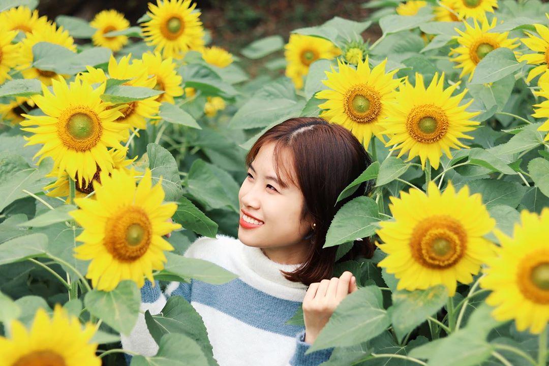 Mê mẩn vẻ đẹp cánh đồng hoa hướng dương nổi tiếng tại Nghệ An - Ảnh 7.