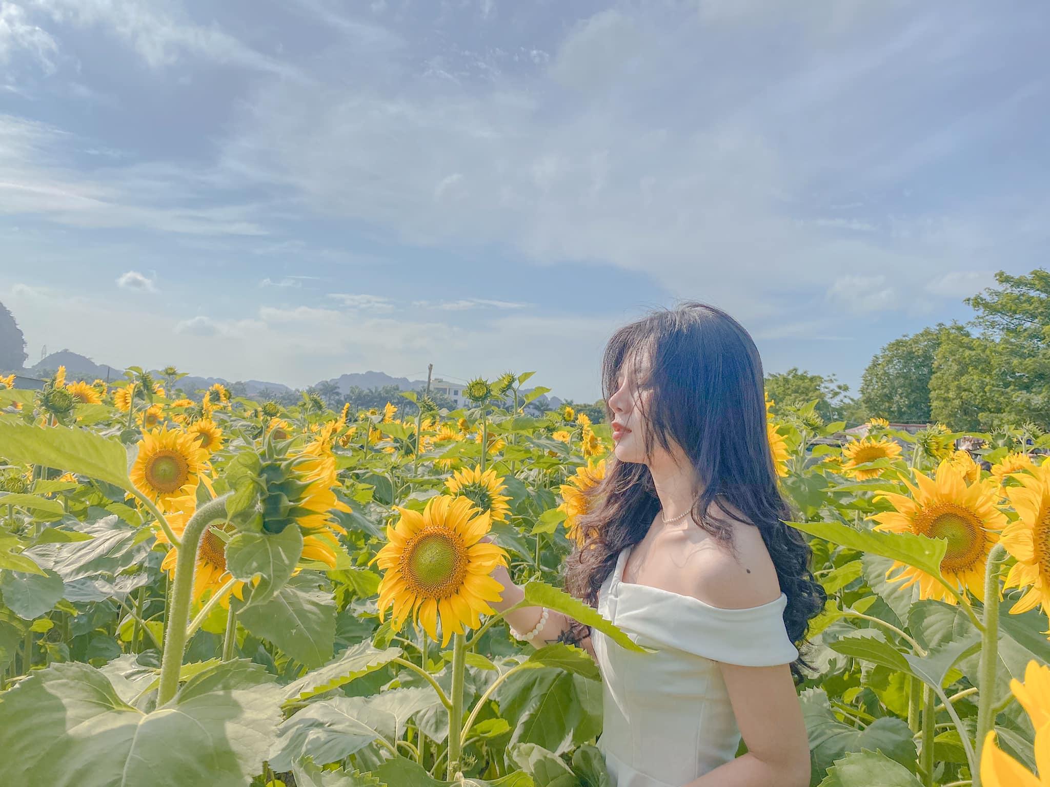 Mê mẩn vẻ đẹp cánh đồng hoa hướng dương nổi tiếng tại Nghệ An - Ảnh 5.