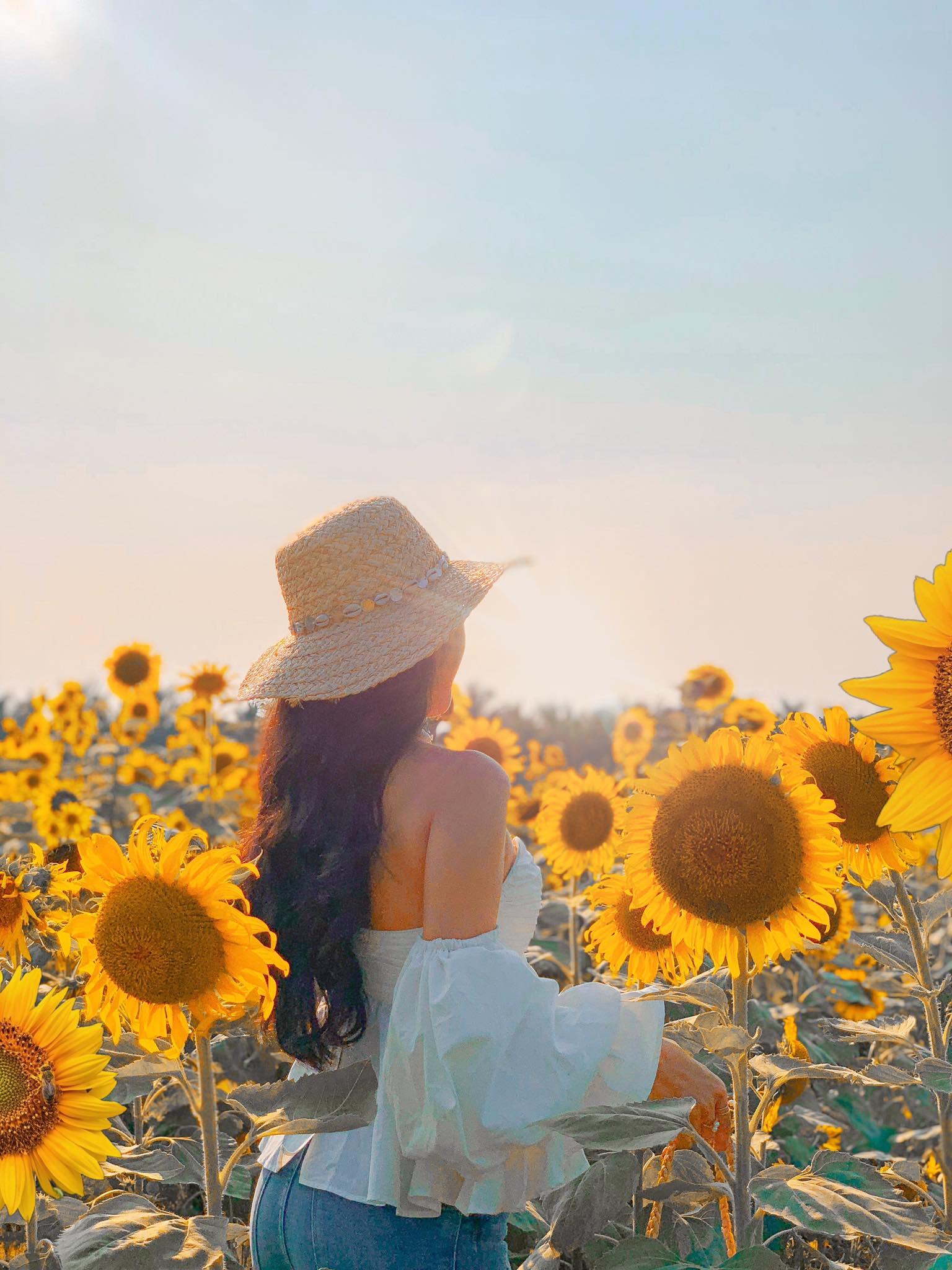 Mê mẩn vẻ đẹp cánh đồng hoa hướng dương nổi tiếng tại Nghệ An - Ảnh 6.