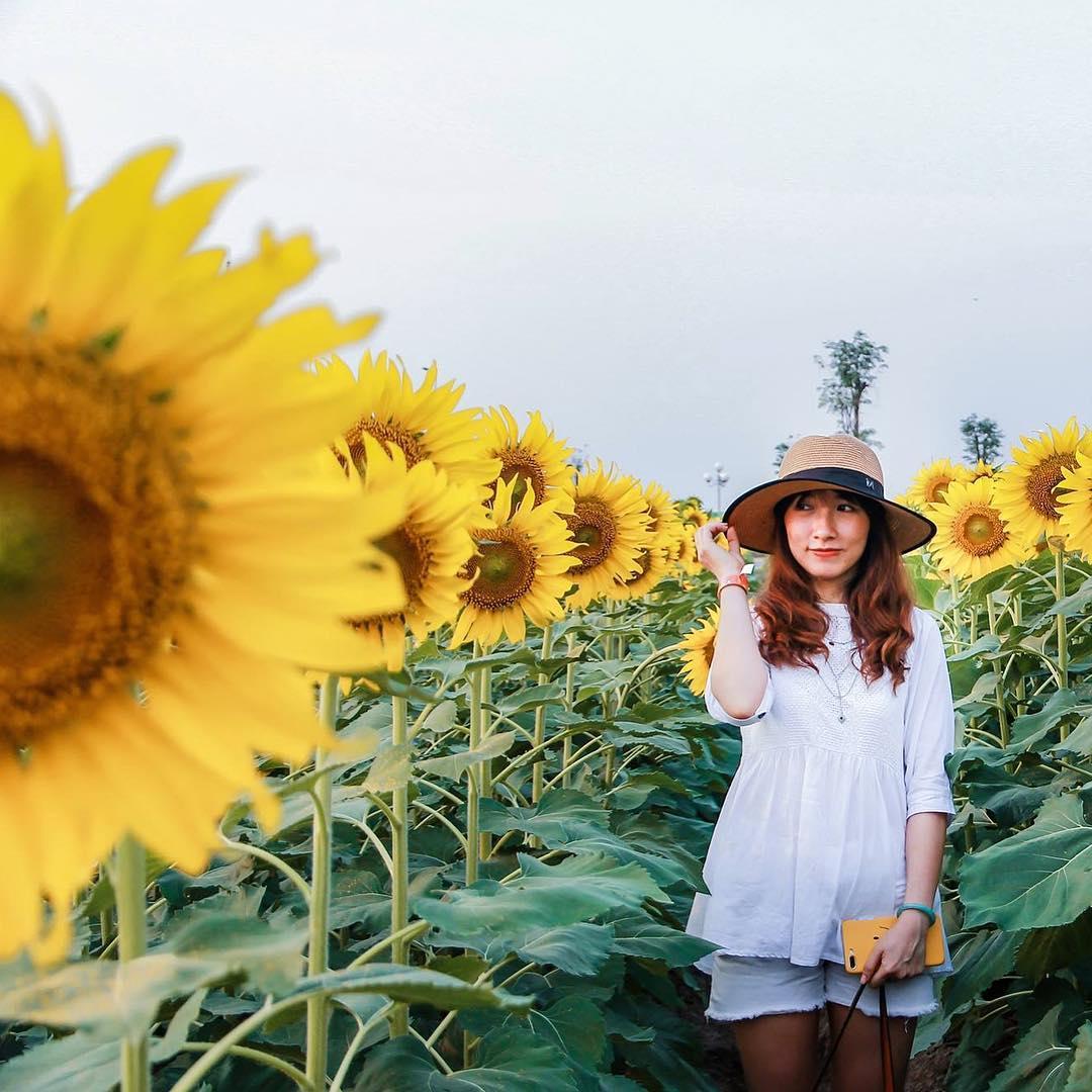 Mê mẩn vẻ đẹp cánh đồng hoa hướng dương nổi tiếng tại Nghệ An - Ảnh 3.