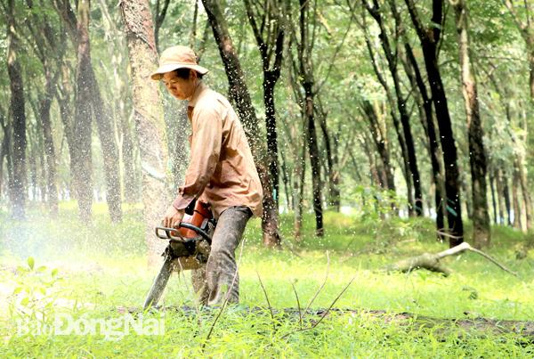 Đồng Nai bàn giao 1.800 ha đất xây sân bay Long Thành trong sáng nay - Ảnh 1.