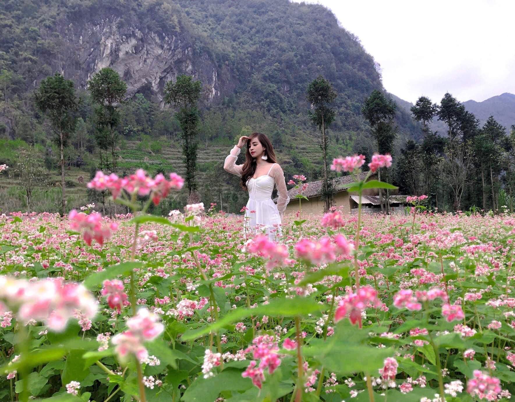 Tour du lịch Hà Giang mùa hoa tam giác mạch: Nhiều điểm đến hấp dẫn với chi  phí chỉ từ 2,1 triệu