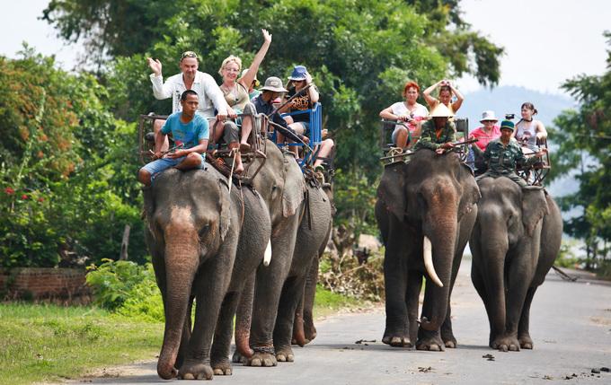 Sẽ không còn dịch vụ cưỡi voi tại Đắk Lắk - Ảnh 1.