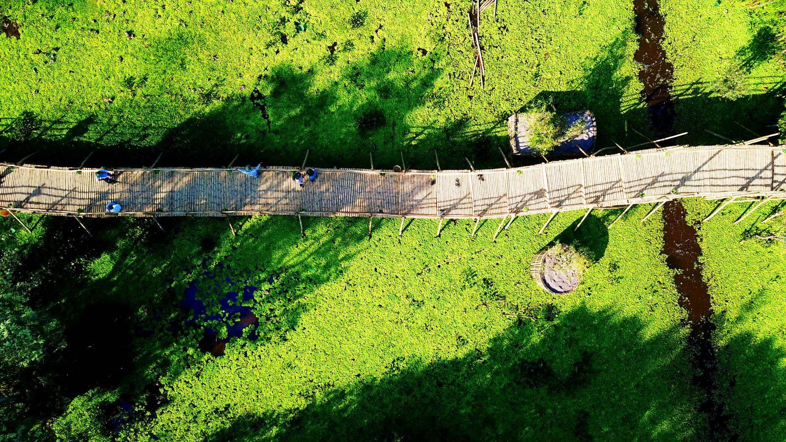 Hành trình khám phá những địa điểm đẹp nhất tại rừng tràm Trà Sư, An Giang  - Ảnh 7.