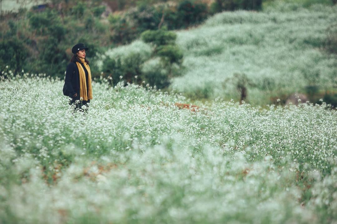 Ngẩn ngơ trước sắc trắng tinh khôi của cao nguyên Mộc Châu mùa hoa cải - Ảnh 3.