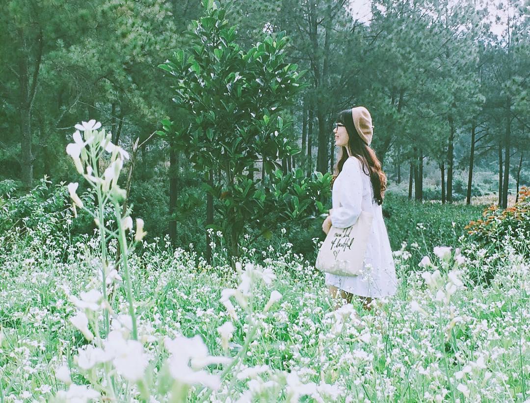 Ngẩn ngơ trước sắc trắng tinh khôi của cao nguyên Mộc Châu mùa hoa cải - Ảnh 5.