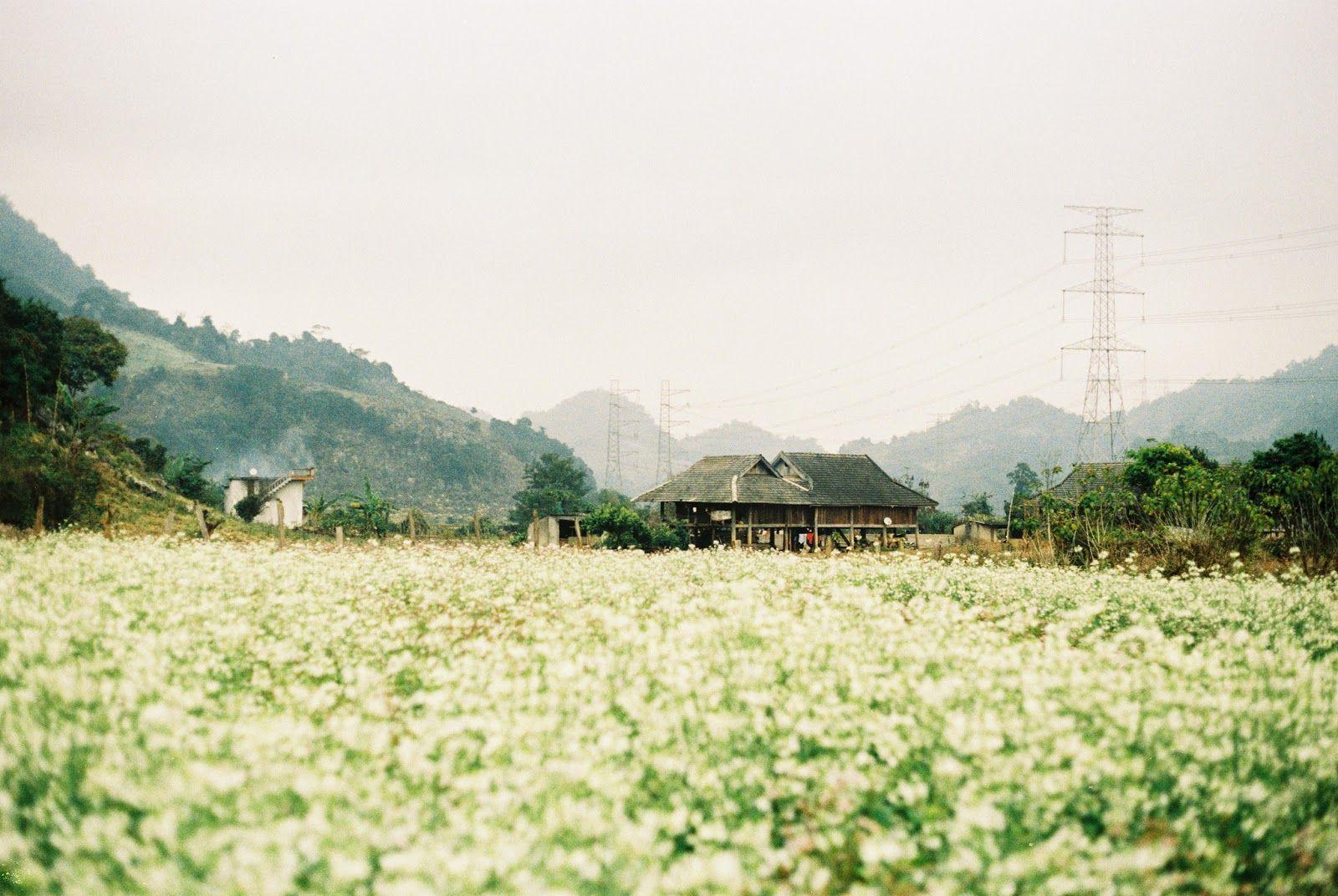 Ngẩn ngơ trước sắc trắng tinh khôi của cao nguyên Mộc Châu mùa hoa cải - Ảnh 6.