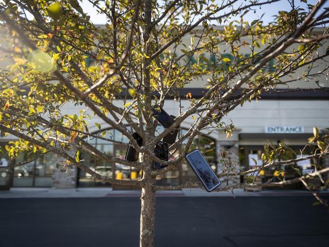 Người giao hàng cho Amazon treo điện thoại lên cây để tăng khả năng nhận đơn - Ảnh 1.