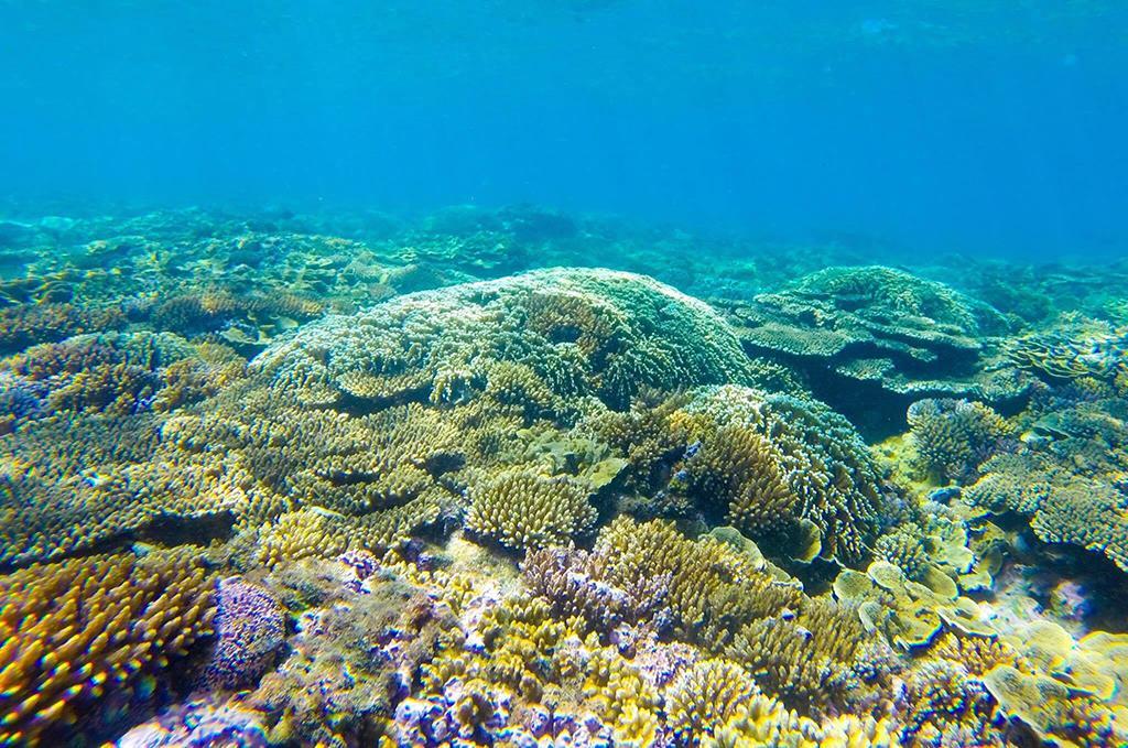 Lặn ngắm san hô, trải nghiệm hấp dẫn không nên bỏ lỡ tại 'đảo ngọc' Phú Quốc - Ảnh 1.