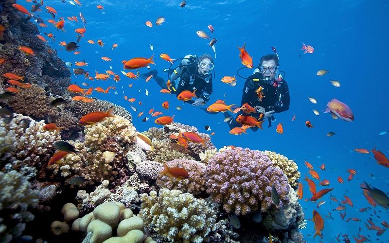 Lặn ngắm san hô, trải nghiệm hấp dẫn không nên bỏ lỡ tại 'đảo ngọc' Phú Quốc - Ảnh 4.