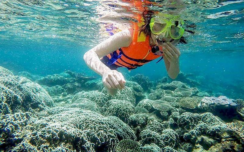 Lặn ngắm san hô, trải nghiệm hấp dẫn không nên bỏ lỡ tại 'đảo ngọc' Phú Quốc - Ảnh 8.