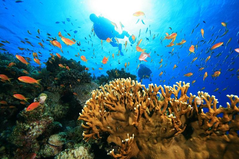 Lặn ngắm san hô, trải nghiệm hấp dẫn không nên bỏ lỡ tại 'đảo ngọc' Phú Quốc - Ảnh 6.
