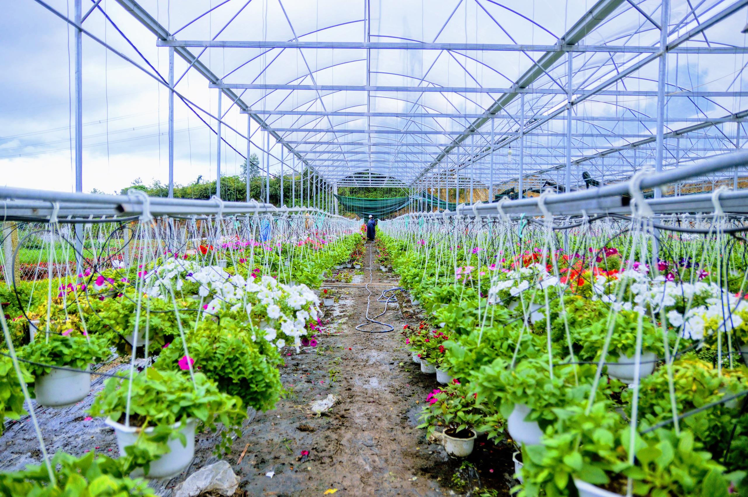 Đà Nẵng kêu gọi doanh nghiệp Hà Lan đầu tư vào nông nghiệp công nghệ cao theo hình thức FDI hoặc PPP - Ảnh 1.