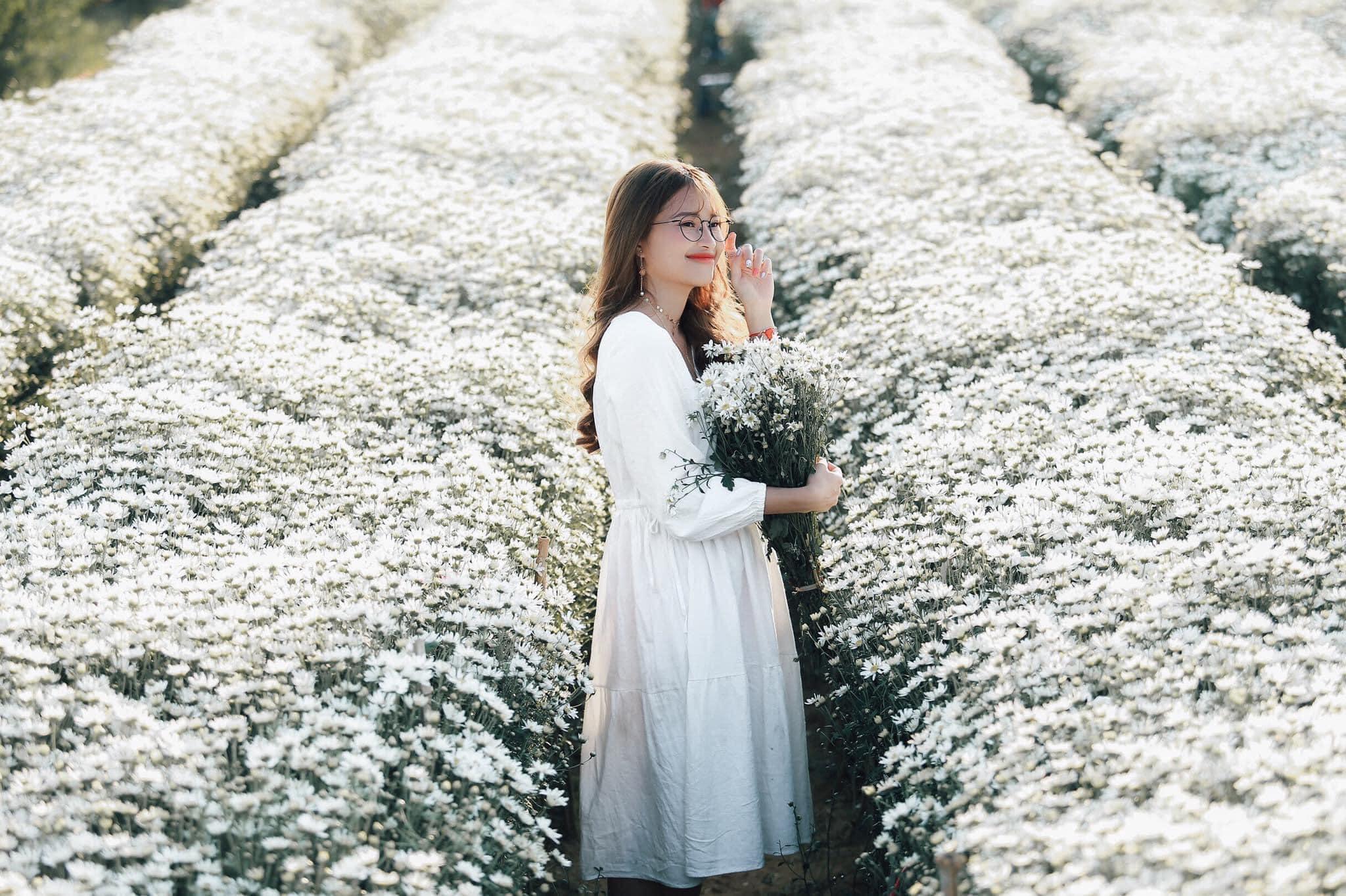 Tậu ngay bộ ảnh xinh lung linh giữa thiên đường cúc họa mi Hà Nội tháng 11 - Ảnh 5.
