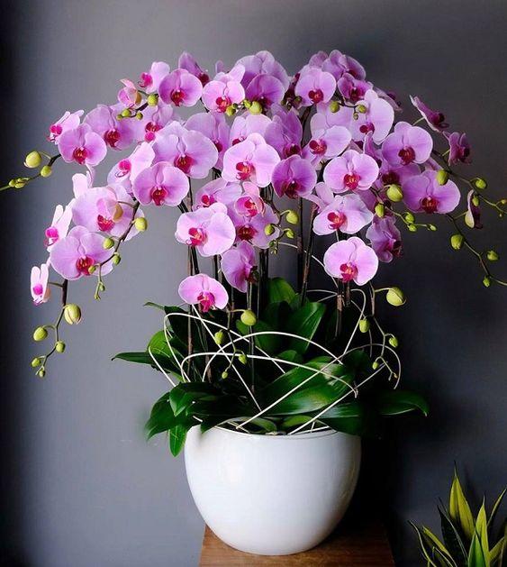 Bộ sưu tập mẫu hoa tặng ngày 20/11 đẹp và ý nghĩa dành cho thầy, cô giáo - Ảnh 5.