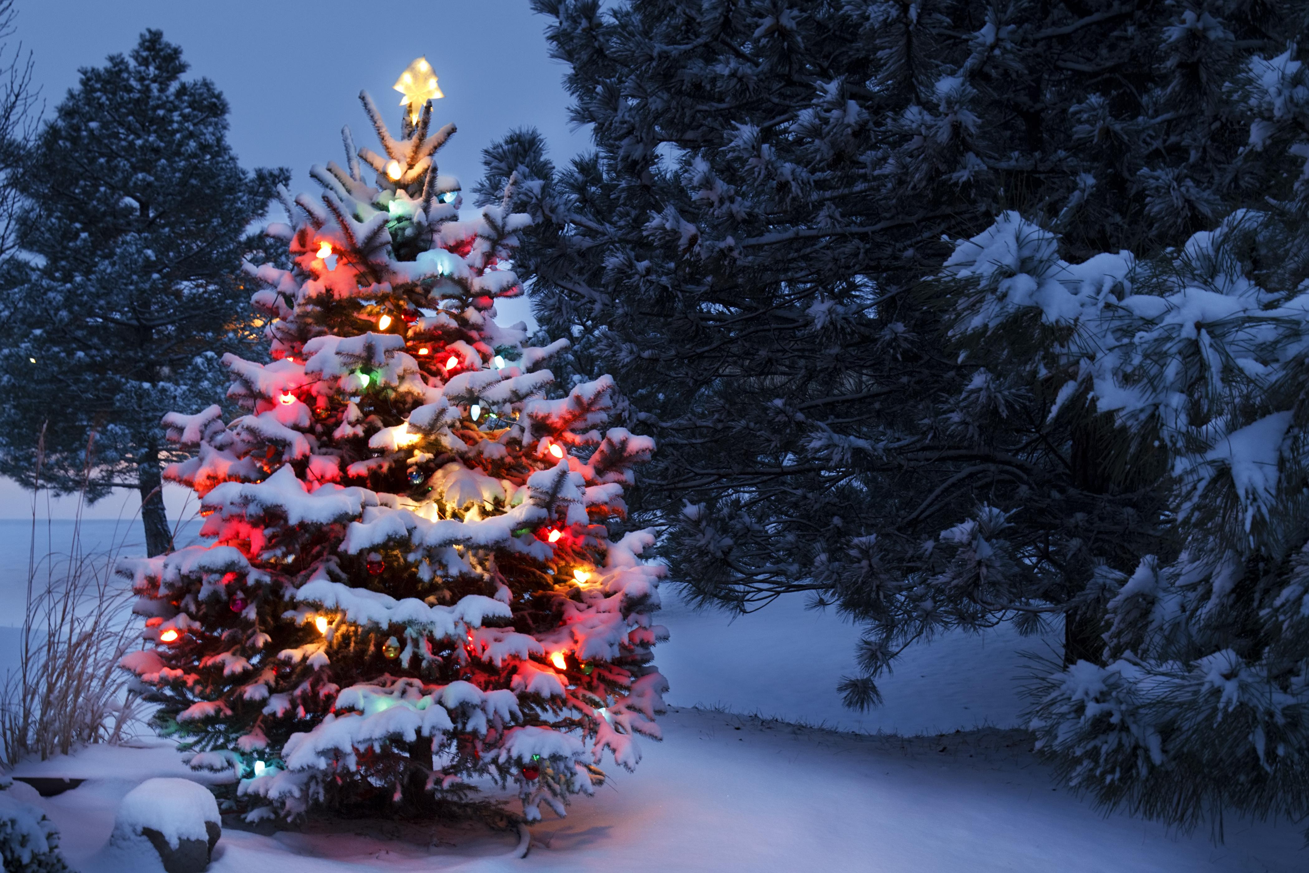 Những xu hướng trang trí cây thông lên ngôi dịp Giáng sinh 2020 - Ảnh 1.