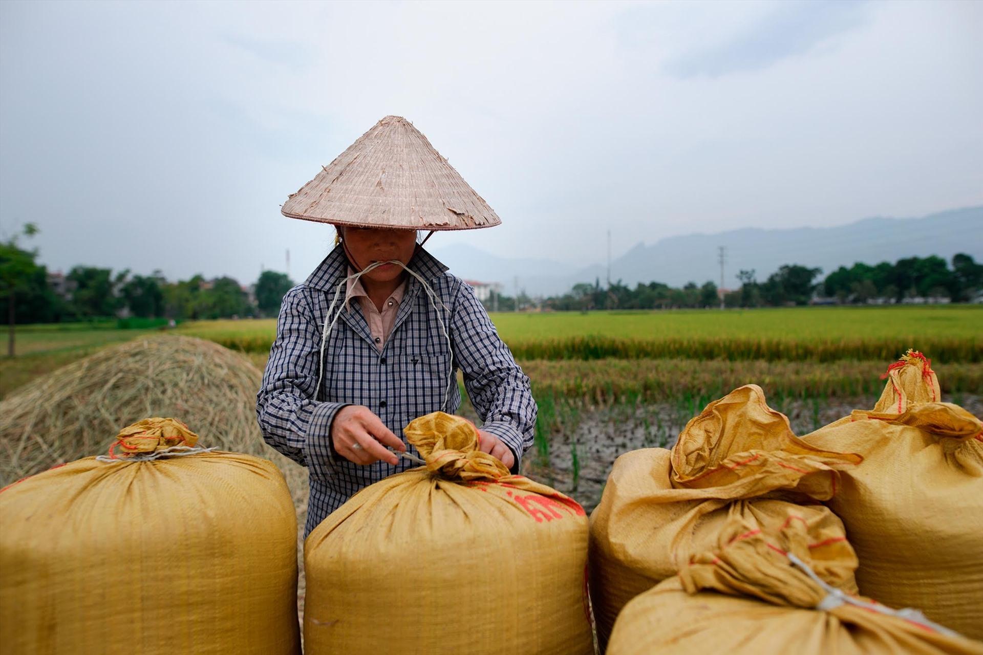 Trung Quốc mua hơn 1/10 gạo xuất khẩu của Việt Nam với giá 13.200 đồng/kg - Ảnh 3.