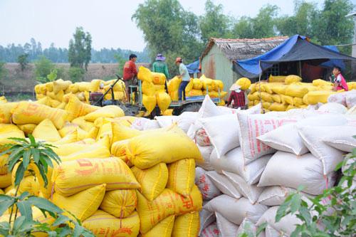 Sẽ xử lí doanh nghiệp khai khống để đăng kí hạn ngạch xuất khẩu gạo - Ảnh 1.