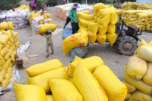 Hơn 38.000 tấn gạo được mở tờ khai vào 0 giờ ngày 26-4 - Ảnh 1.