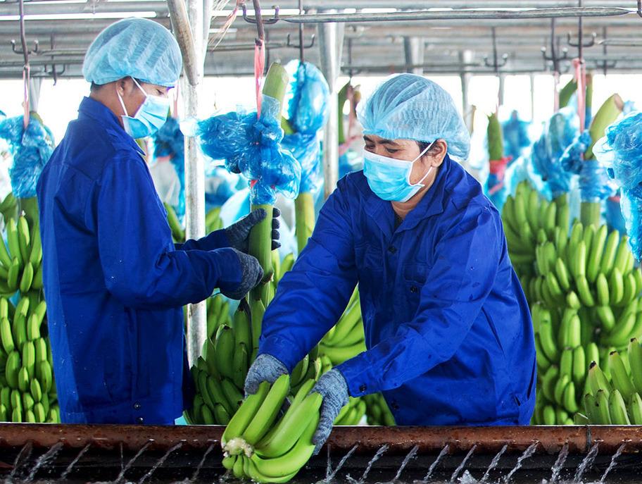 Công ty nông nghiệp của bầu Đức chính thức có lãi sau 6 quý thua lỗ liên tục - Ảnh 1.