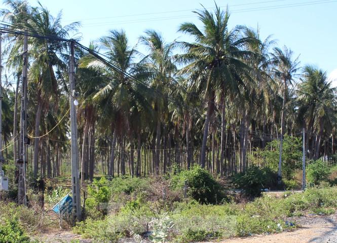 Sử dụng hàng trăm ha đất công không thuế: Bất ngờ chuyển đất nông nghiệp thành NƠXH - Ảnh 2.