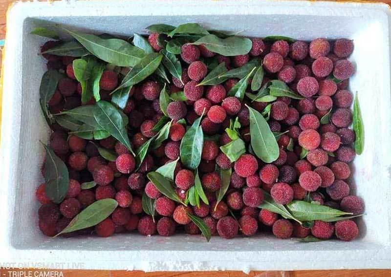 Thanh mai Trung Quốc ồ ạt về chợ, giá đắt dân Việt vẫn ăn hàng - Ảnh 2.