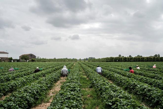Thất nghiệp trong đại dịch, người Italy quay lại với nghề nông - Ảnh 1.