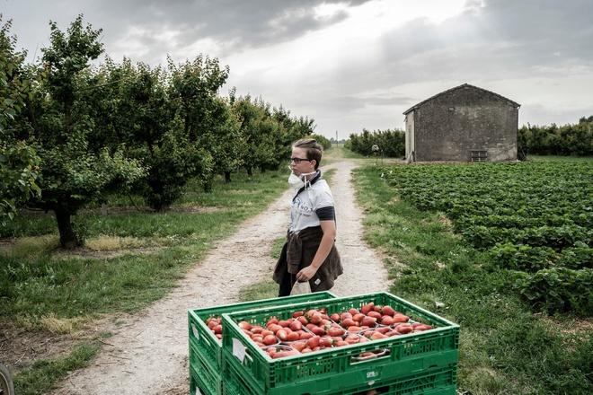 Thất nghiệp trong đại dịch, người Italy quay lại với nghề nông - Ảnh 2.