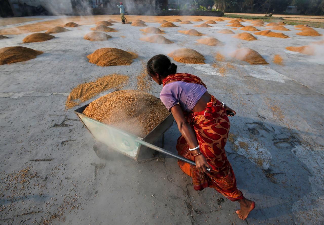 Giá gạo xuất khẩu Việt Nam đang cao nhất gần một năm qua, hơn gạo Ấn Độ gần 100 USD/tấn - Ảnh 1.