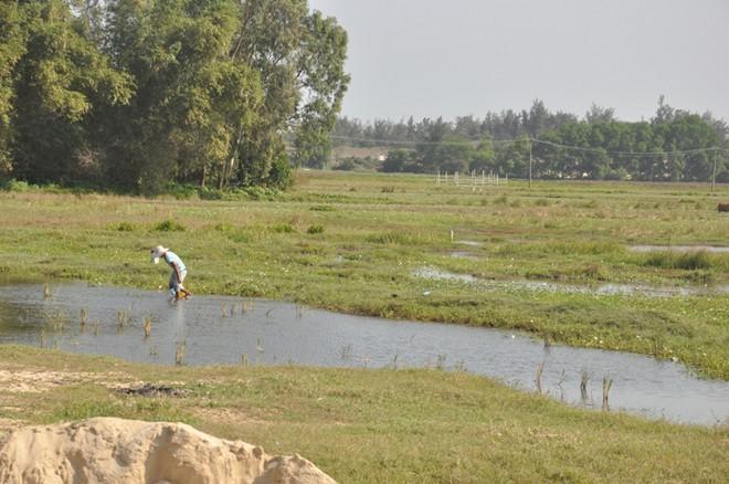 Quảng Nam bổ sung 18 danh mục dự án thu hồi đất và chuyển mục đích sử dụng đất lúa - Ảnh 2.