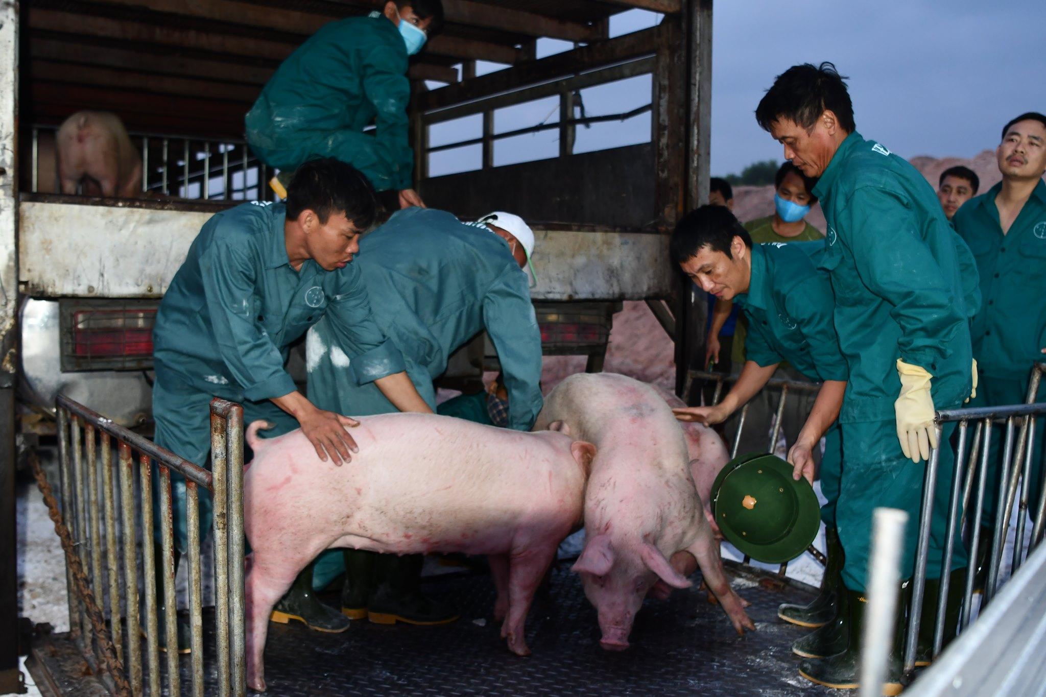 5 triệu con heo Thái Lan sẵn sàng về Việt Nam, Bộ Nông nghiệp: Giá heo trong nước chắc chắn sẽ giảm - Ảnh 1.