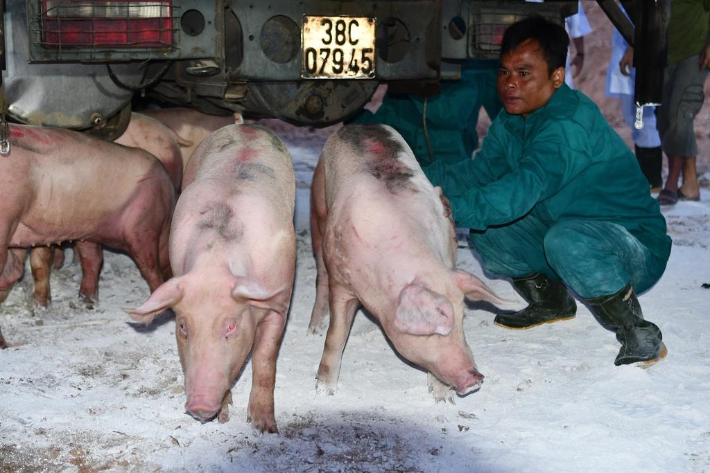 Giá lợn sống tại Thái Lan tăng mạnh sau thông tin Việt Nam nhập khẩu - Ảnh 1.
