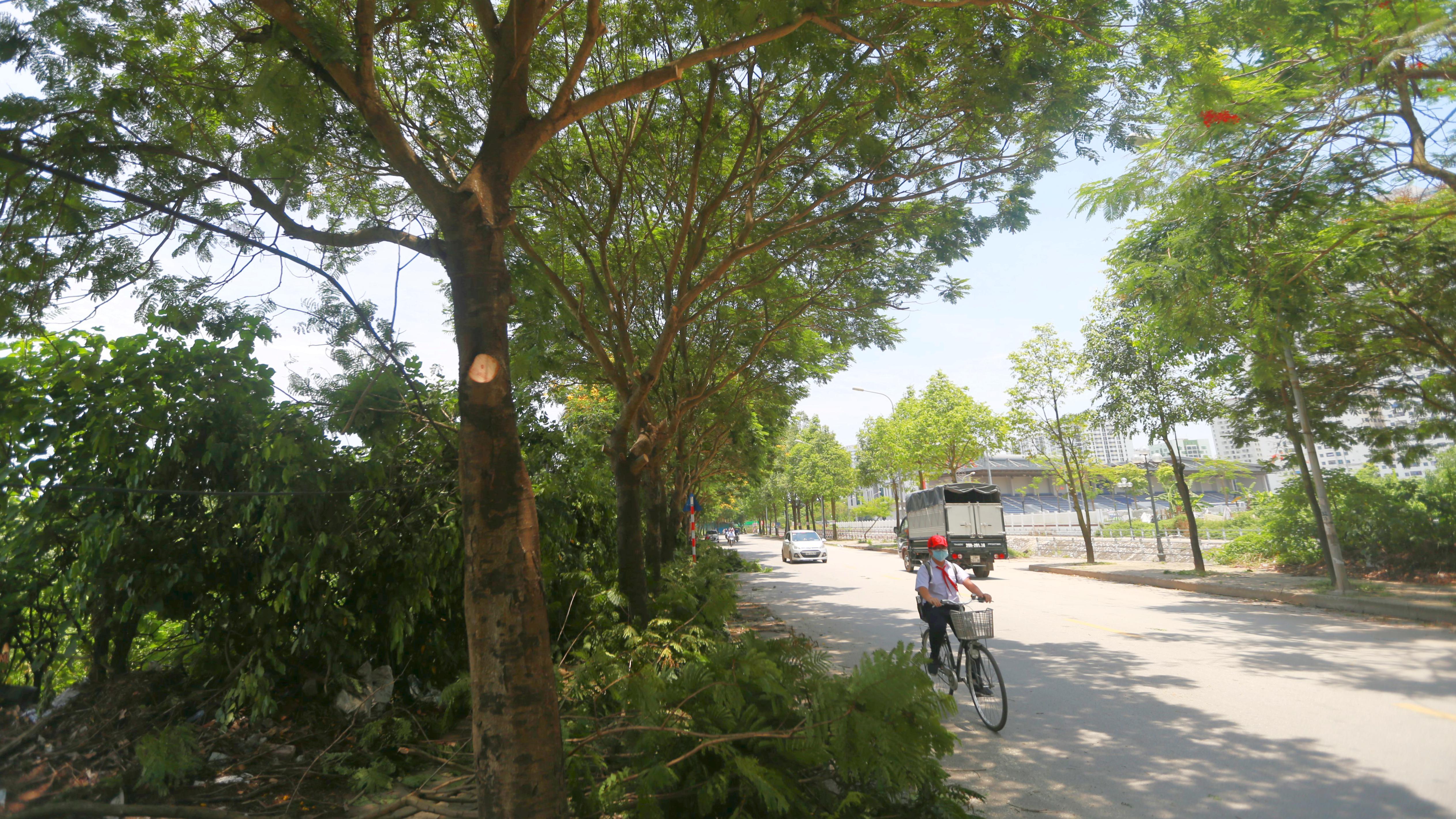Các tuyến đường trồng nhiều phượng vĩ ở Hà nội bắt đầu được triển khai cắt tỉa - Ảnh 3.
