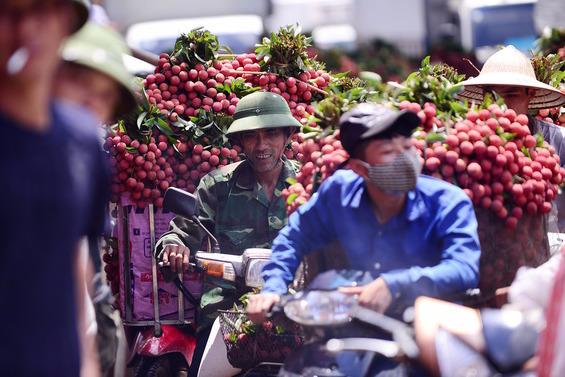 Bắc Giang đã tiêu thụ gần 17.000 tấn vải thiều, chuẩn bị đưa trái vải lên sàn thương mại điện tử - Ảnh 2.