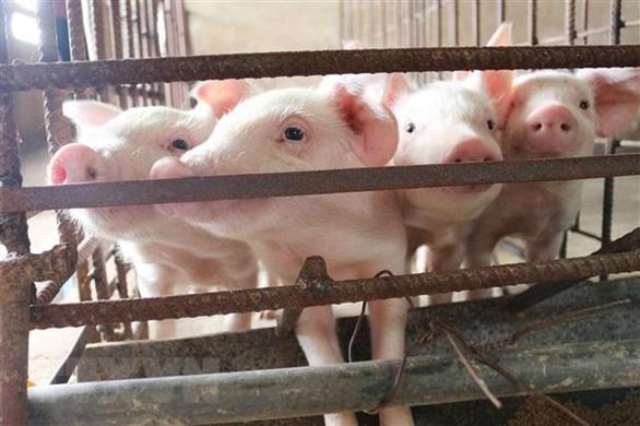 Lô thịt lợn nhập khẩu đầu tiên từ Thái Lan có giá 81.000 đồng/kg, chính thức bán ra thị trường ngày 23/6 - Ảnh 1.