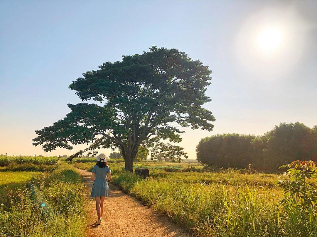 Tour du lịch Huế từ Đà Nẵng: Hè chao nghiêng cùng những gói tour đầy hấp dẫn  - Ảnh 17.