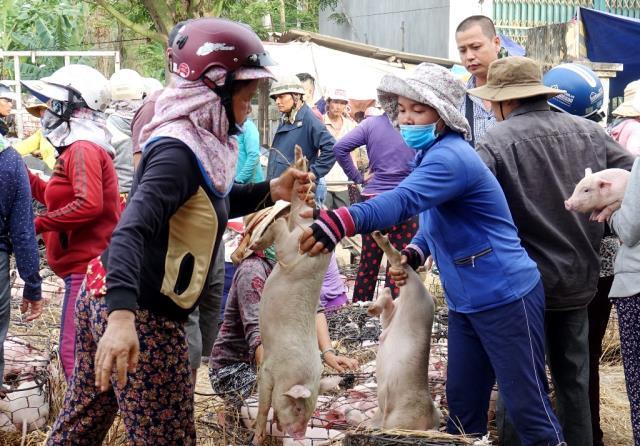 Giữa mùa khan hiếm, đắt đỏ, tìm về chợ heo giống độc nhất Việt Nam - Ảnh 4.