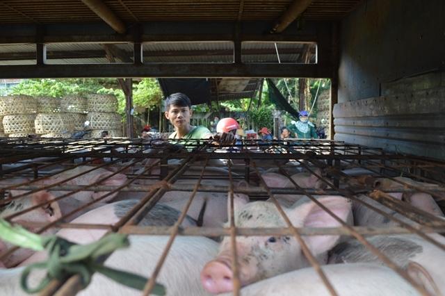 Giữa mùa khan hiếm, đắt đỏ, tìm về chợ heo giống độc nhất Việt Nam - Ảnh 3.