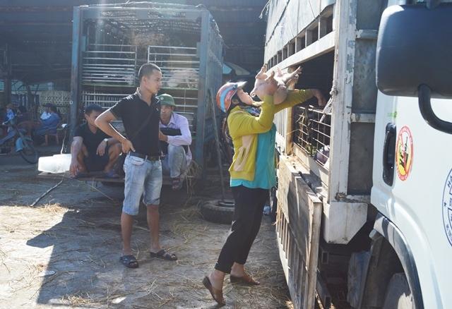 Giữa mùa khan hiếm, đắt đỏ, tìm về chợ heo giống độc nhất Việt Nam - Ảnh 8.