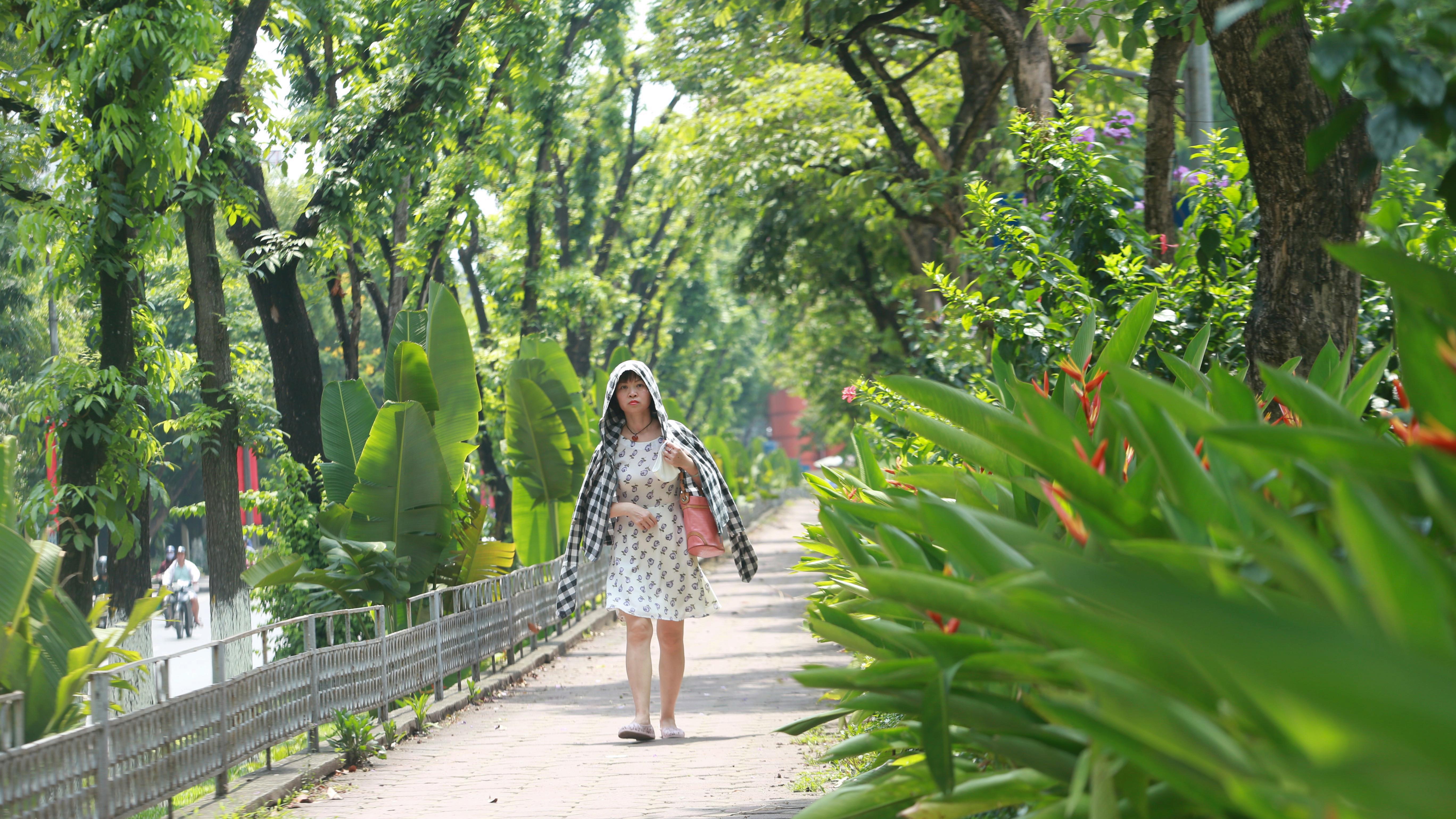 Đoạn đường Kim Mã từng di dời cây cổ thụ đang dần tái phủ xanh - Ảnh 4.