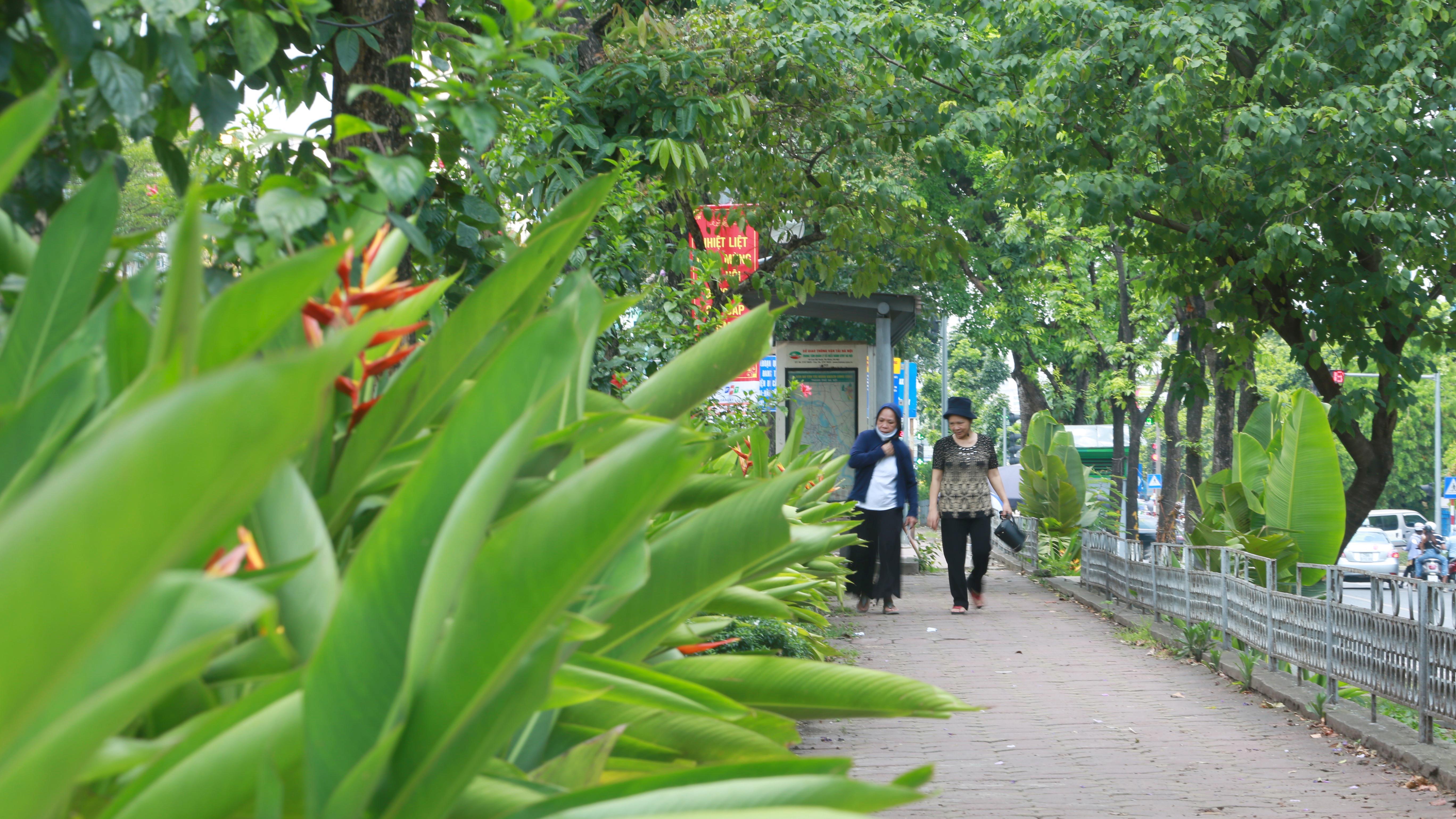 Đoạn đường Kim Mã từng di dời cây cổ thụ đang dần tái phủ xanh - Ảnh 9.