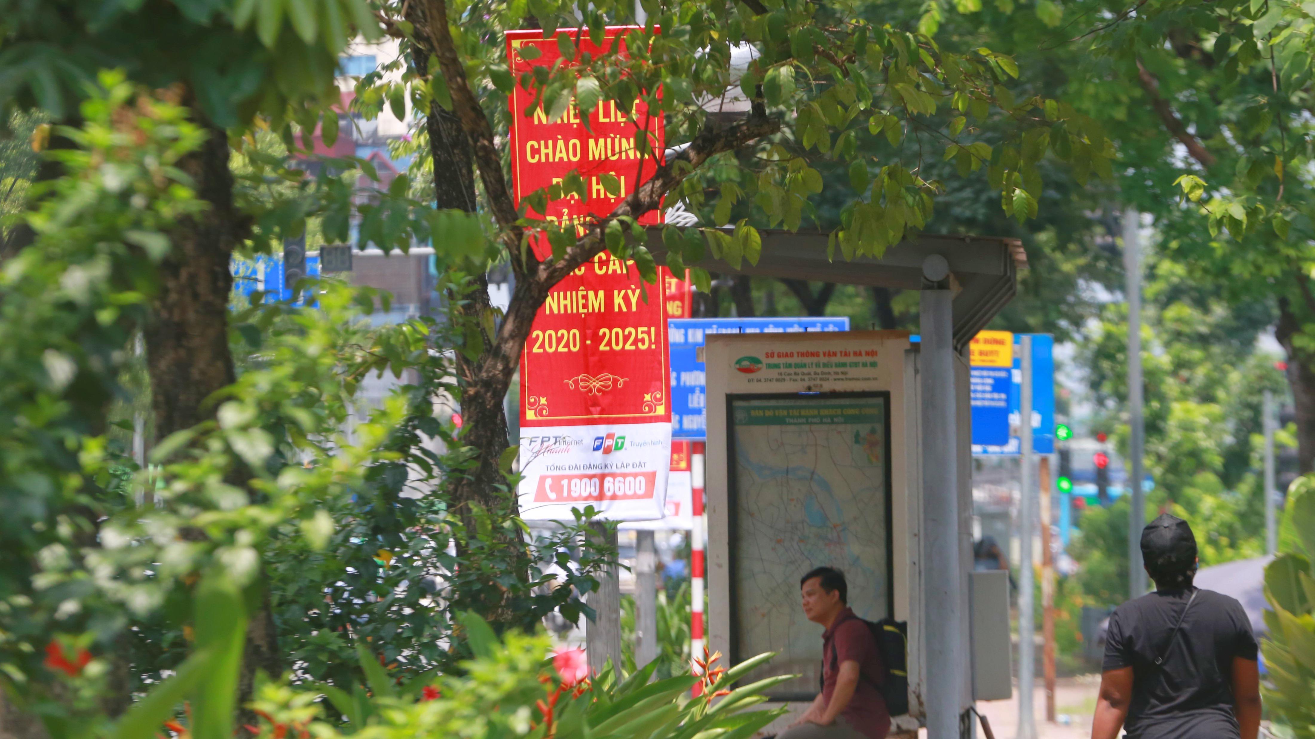 Đoạn đường Kim Mã từng di dời cây cổ thụ đang dần tái phủ xanh - Ảnh 7.