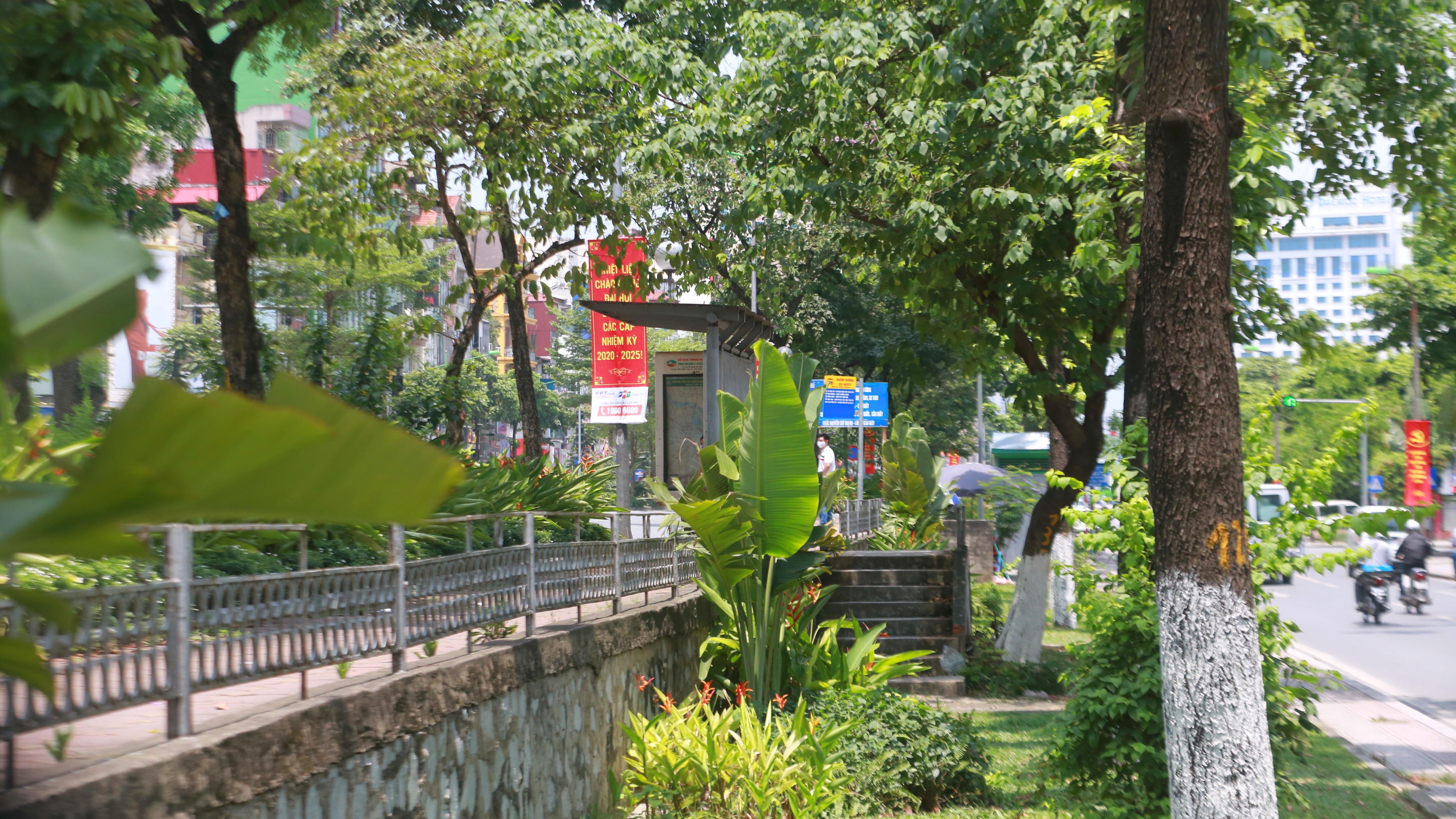 Đoạn đường Kim Mã từng di dời cây cổ thụ đang dần tái phủ xanh - Ảnh 5.