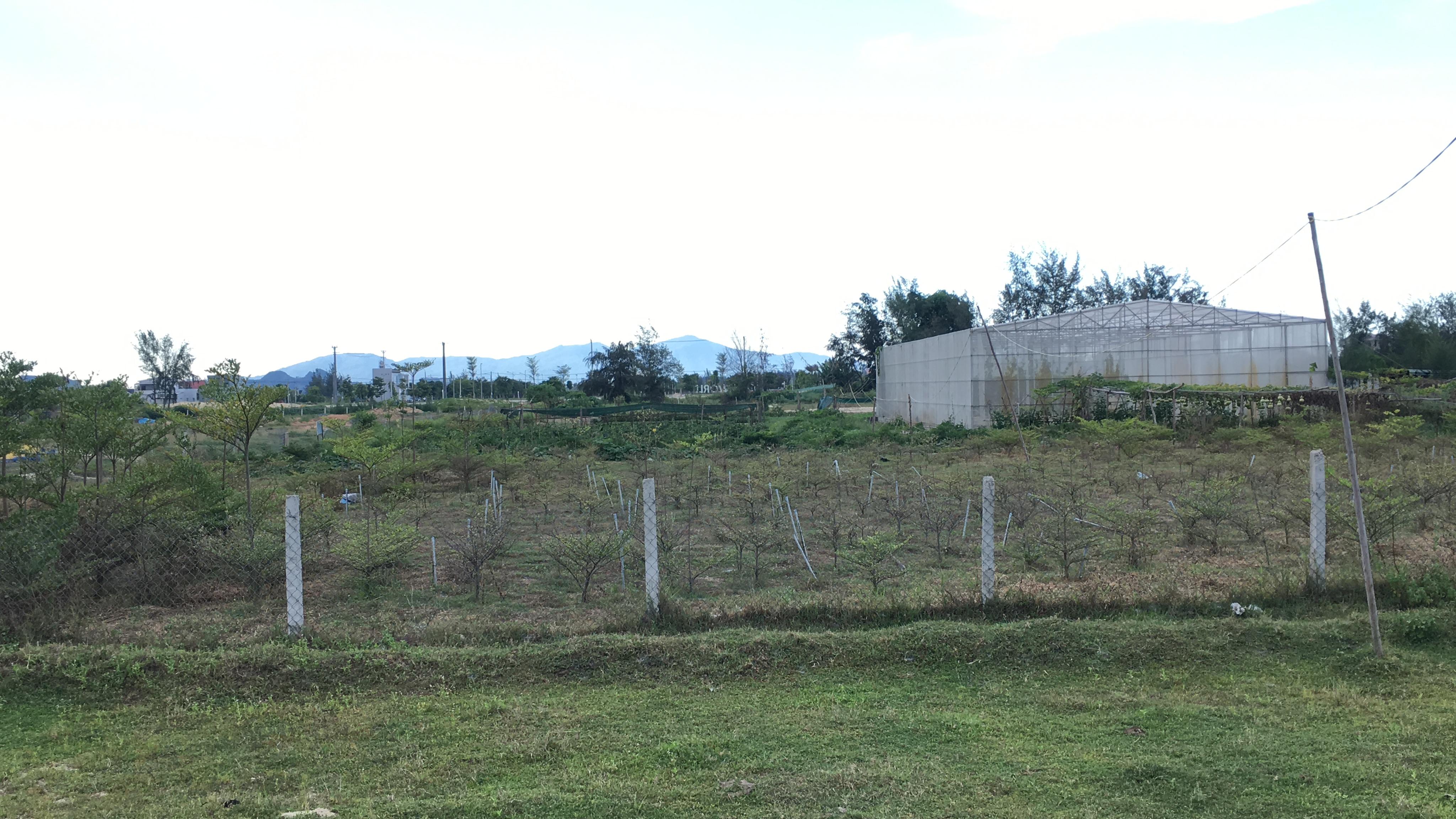 Quảng Nam: Dự án Khu đô thị 7B mở rộng hạ tầng dang dở, đang là nơi chăn thả bò - Ảnh 9.