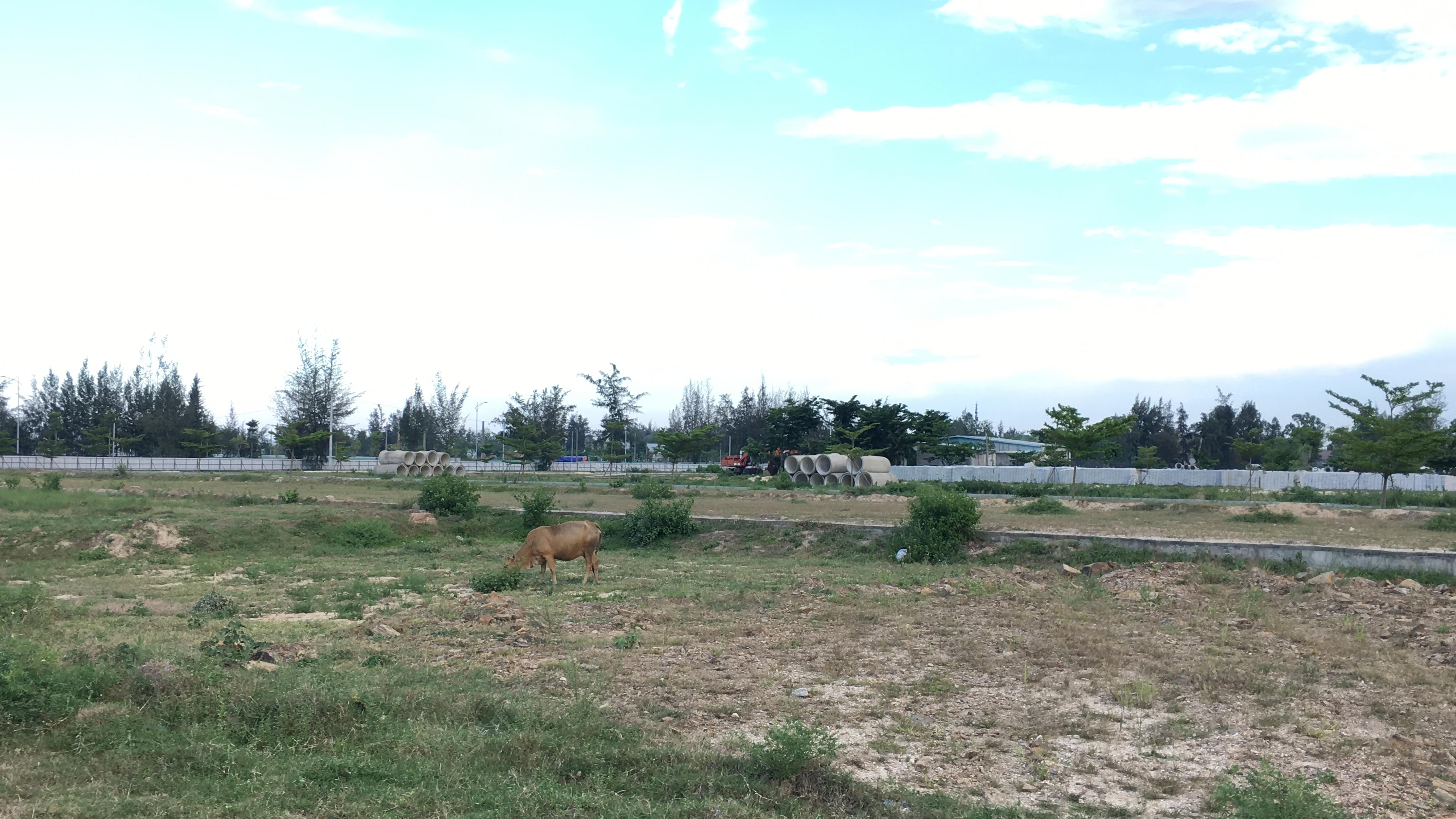 Quảng Nam: Dự án Khu đô thị 7B mở rộng hạ tầng dang dở, đang là nơi chăn thả bò - Ảnh 11.