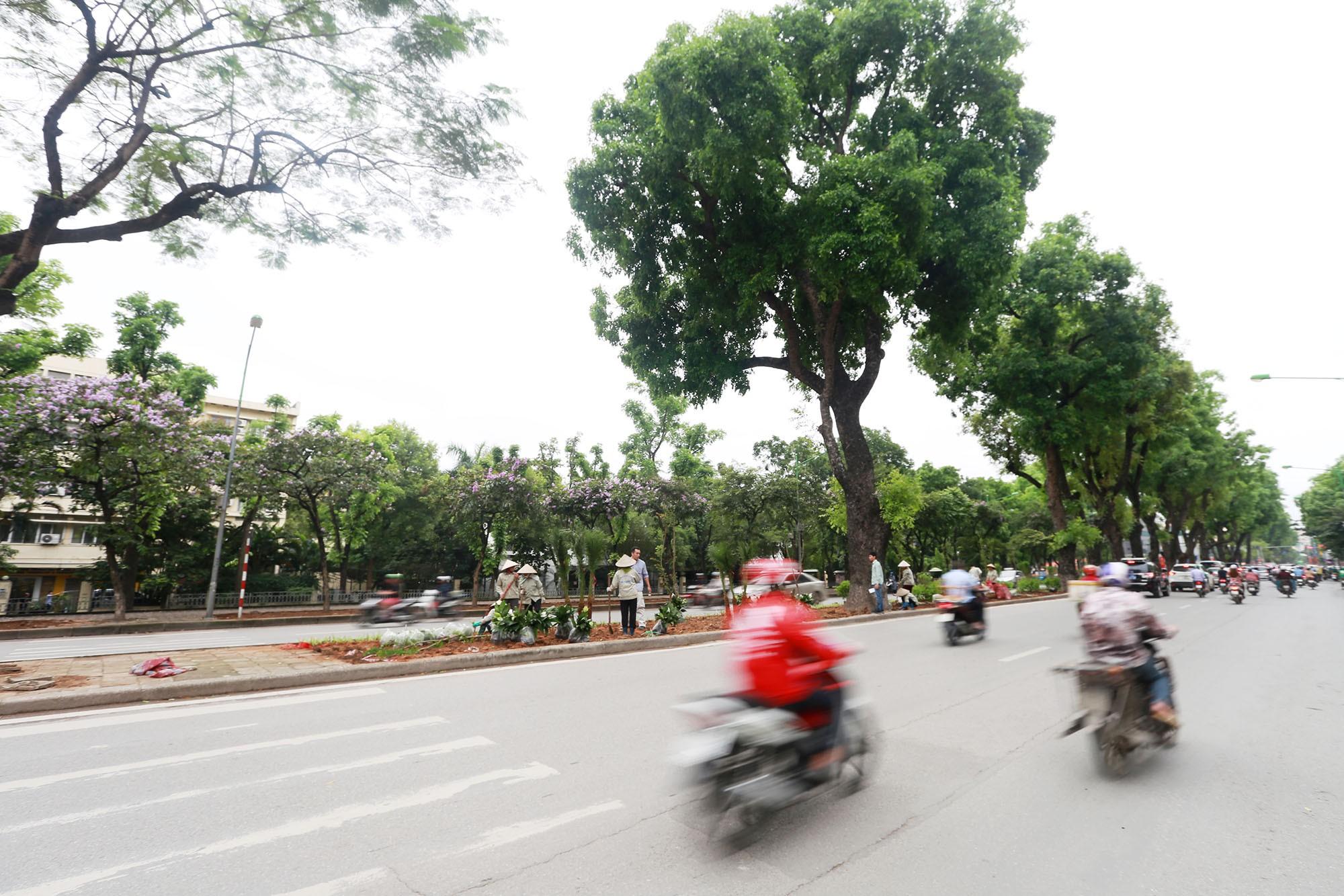 Đoạn đường Kim Mã từng di dời cây cổ thụ đang dần tái phủ xanh - Ảnh 14.