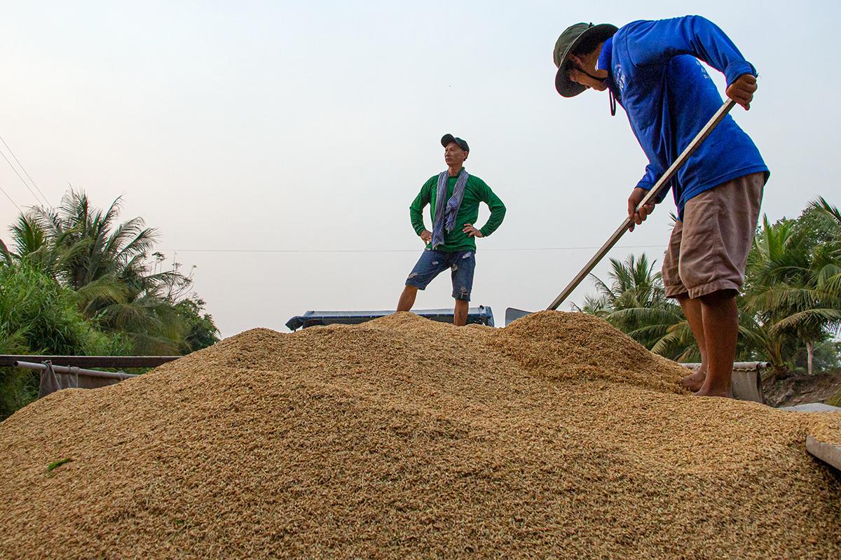 Giá gạo Việt Nam xuất khẩu cao nhất hơn 8 năm qua, tăng liên tiếp từ tháng 4 đến nay - Ảnh 3.